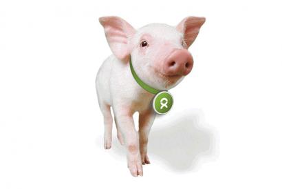 Oxfam – Oxfam Unwrapped – A Piglet